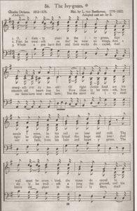 Beethoven-Articoli-Ivy-Green02